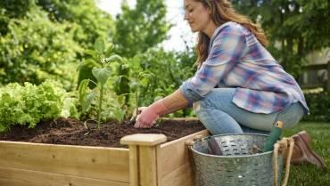 Зеленчуково градинарство