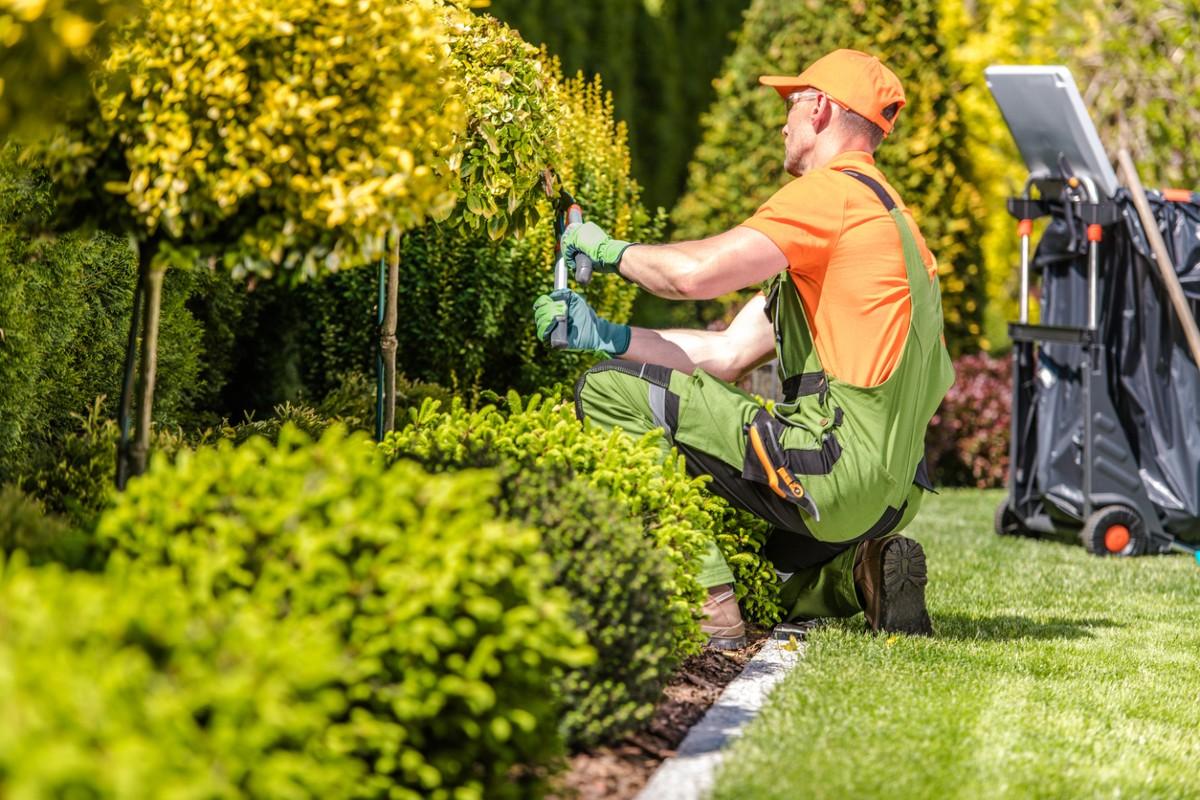 Поддръжка на градината