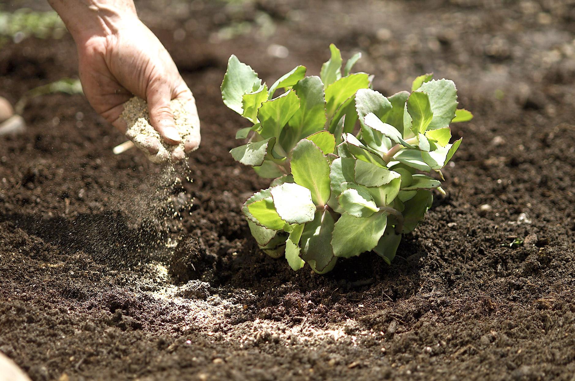 Органично градинарство