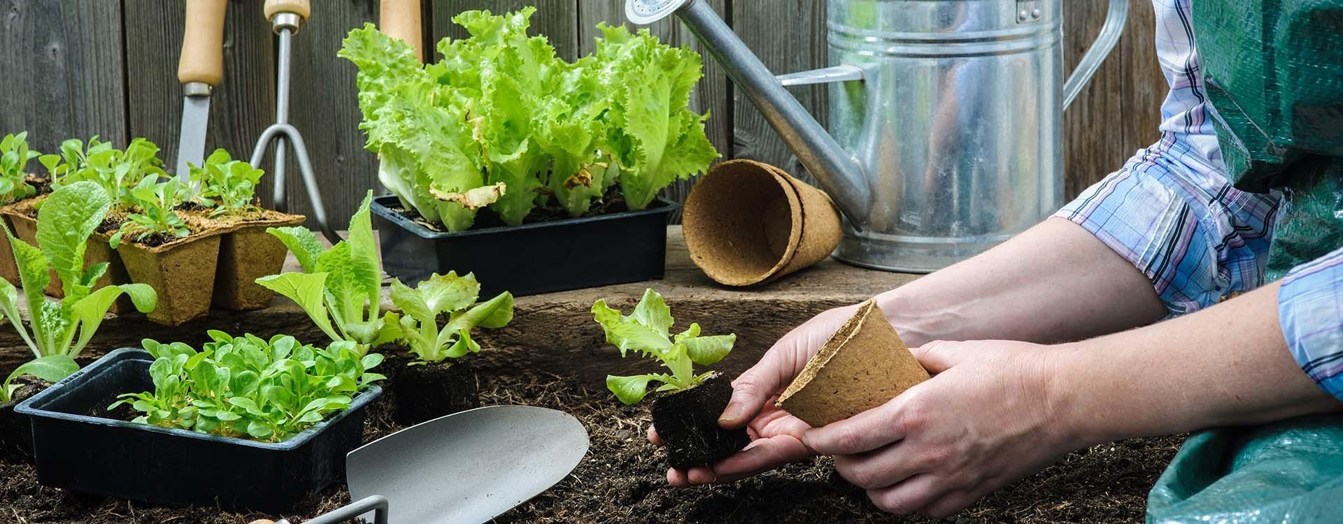 6 стъпки за отличен старт на първата ви зеленчукова градина