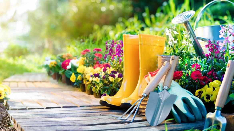 В 9 лесни стъпки научете как да създадете органична градина.